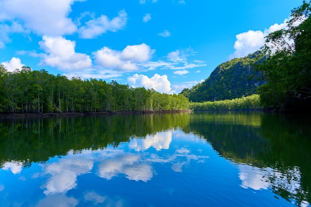 Natura pura paesaggio fiume tra foreste di mangrovie.