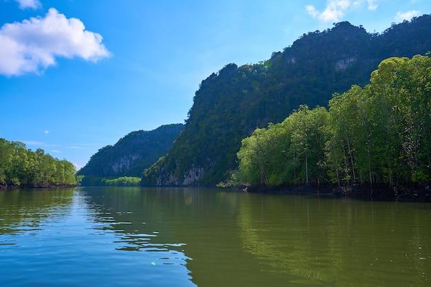 Natura pura paesaggio fluviale tra foreste di mangrovie.