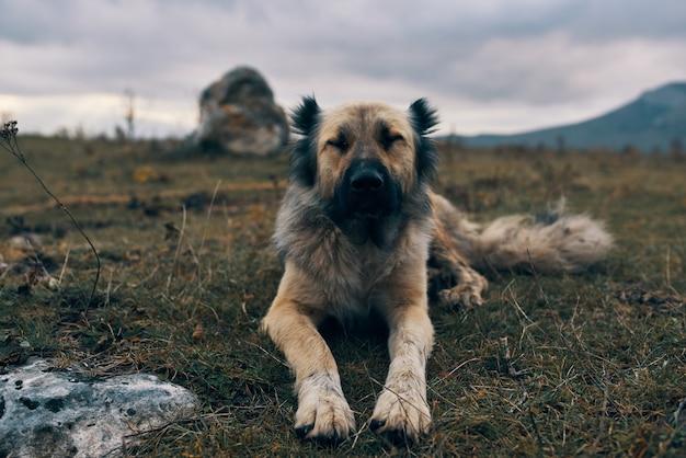 Cane di razza pura in un campo all'aperto sdraiato sull'erba amicizia viaggi