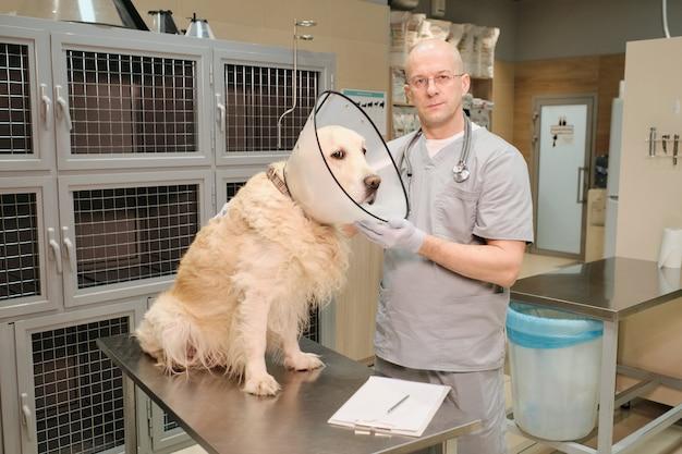 Cane di razza con collare medico seduto sul tavolo mentre il veterinario lo esamina in clinica