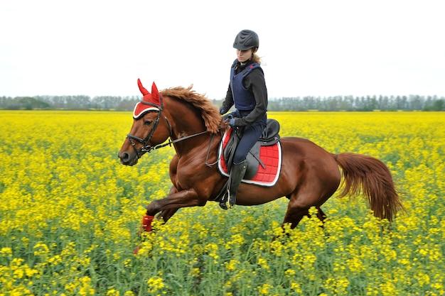Cavallo di razza con un cavaliere su un campo di colza
