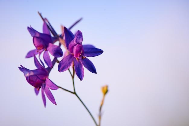 Fiore viola contro un cielo blu con lo spazio della copia.
