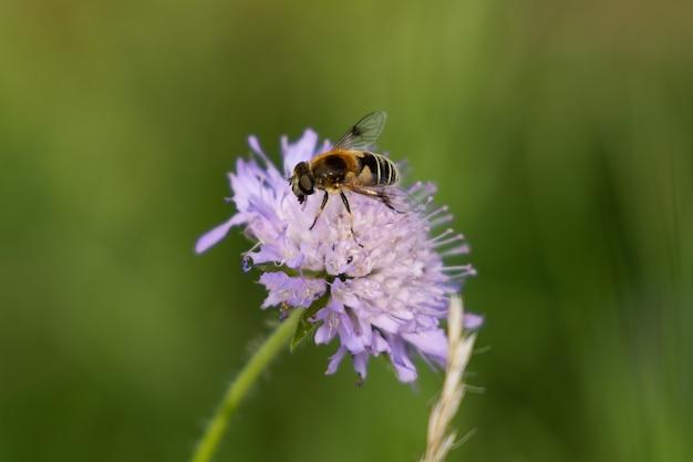 Fiore viola con ape nella foresta in una giornata di sole