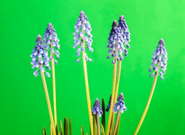 Fiori viola che crescono nella stagione primaverile
