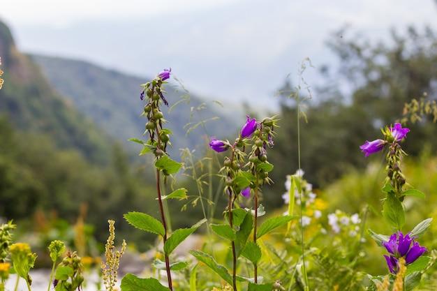 Fiori di montagna viola