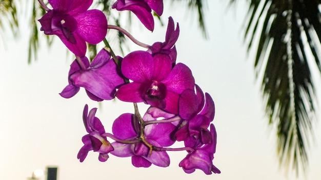 Fiore di orchidea viola alle maldive.
