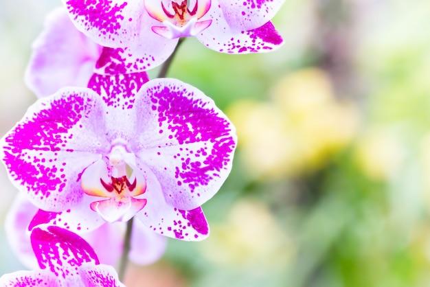 Orchidee viola in una foresta tropicale selvaggia. bellissimi fiori primaverili con uno sfondo verde tenue