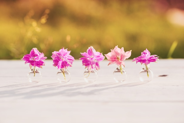 Fiori viola e viola di elicriso, sera d'estate nel villaggio, caldo tramonto soleggiato, ombre di spazi aperti. belle piante di batanica in un pallone di vetro.
