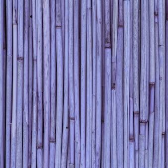 Texture viola di canne o bambù per lo sfondo