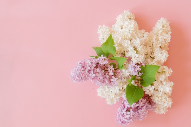 Mazzo lilla viola e bianco su sfondo rosa. composizione floreale
