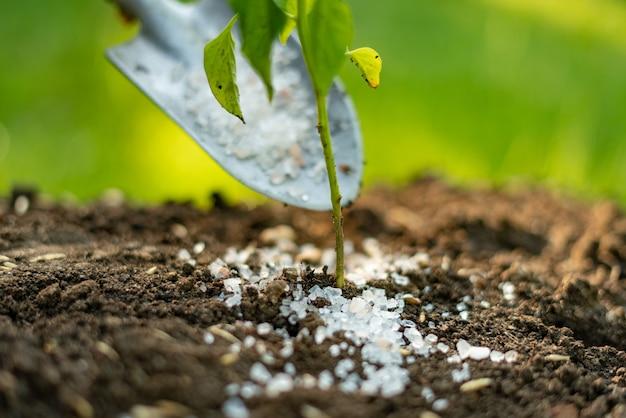 Mettere del fertilizzante ogm o veleno nella pala nel terreno sotto le piccole piante
