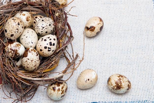Uova di quaglia in un nido di rami su sfondo blu, tessuto leggero, sfondo pasquale, cibo naturale, copia spazio, vista dall'alto