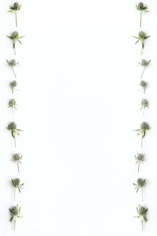 Regina delle alpi design su sfondo bianco