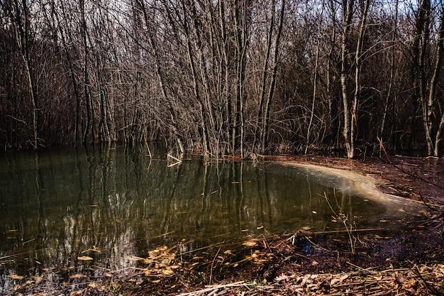 Insenatura tranquilla della palude con gli alberi nell'acqua