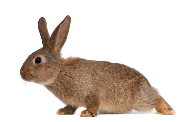 Coniglio contro la superficie bianca
