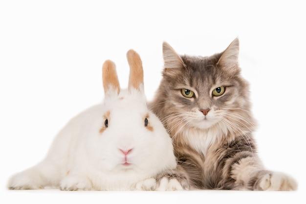 Coniglio e gatto insieme.
