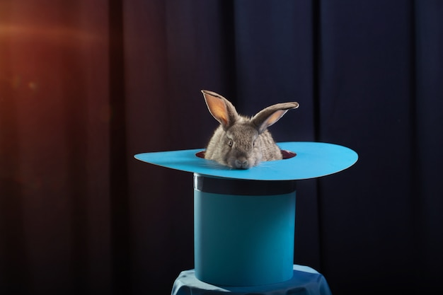 Coniglio in cappello su sfondo blu