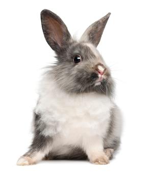 Coniglio seduto contro la superficie bianca