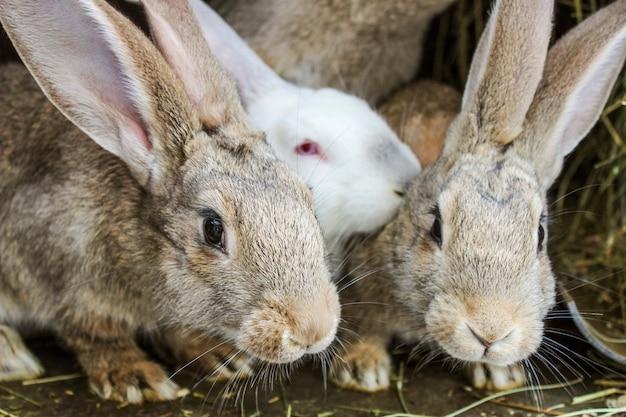 Conigli in una gabbia
