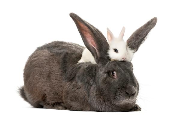 Conigli davanti a una superficie bianca