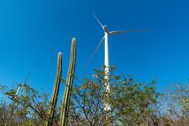 Zattera in mare e turbine eoliche ad aracati vicino a fortaleza ceara brasile