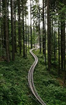 Guida in discesa su un carrello nella foresta piccole montagne russe nel parco a tema intorno alla foresta
