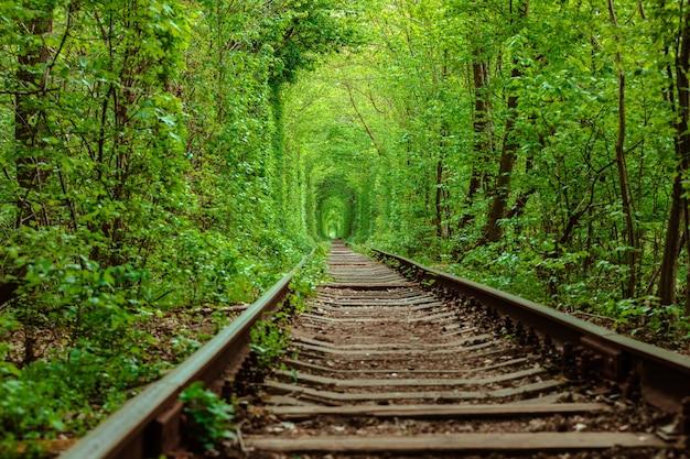 Una ferrovia nel tunnel della foresta primaverile dell'amore