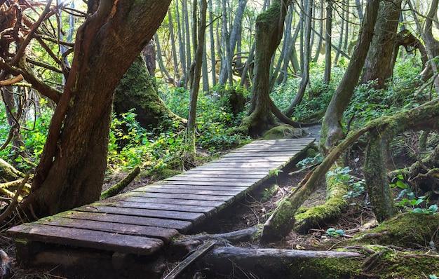 Foresta pluviale nell'isola di vancouver, british columbia, canada