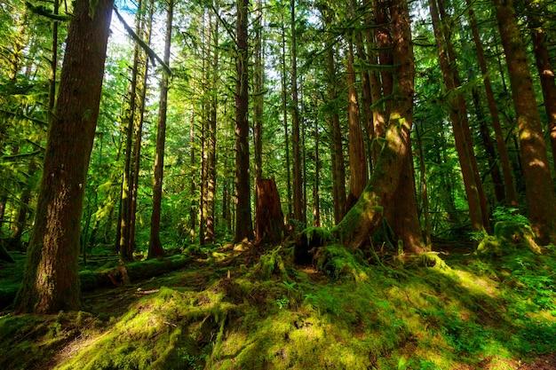 Foresta pluviale con fitta vegetazione