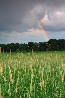 Arcobaleno sopra il campo