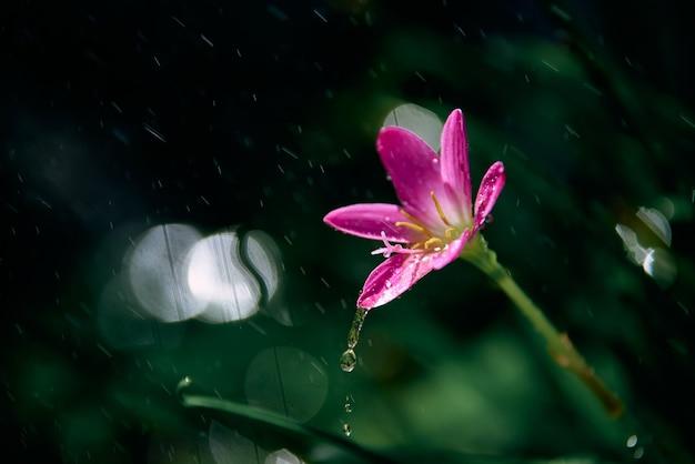 Gocce di pioggia sul piccolo fiore rosa in una giornata piovosa