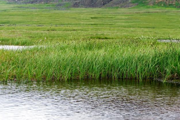 Palude alta con un lago d'acqua aperta nella tundra di montagna
