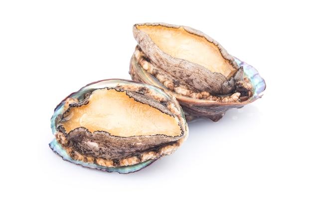 Abalones crudi isolati su bianco