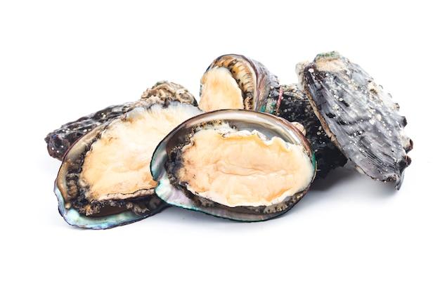 Abalones grezzi sui precedenti bianchi