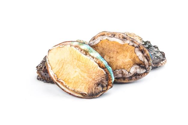 Abalones crudi su fondo bianco