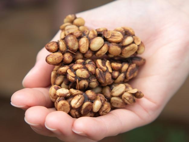 Chicchi di caffè luwak crudi prima della tostatura.