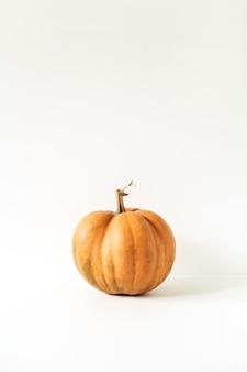 Zucca arancione cruda dello zenzero su bianco