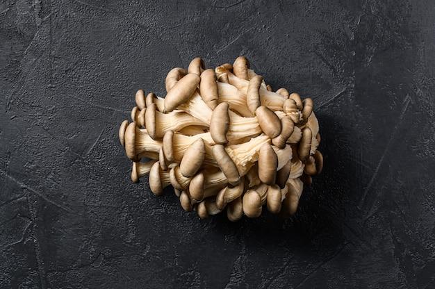 Funghi ostrica crudi. cibo organico. sfondo nero. vista dall'alto