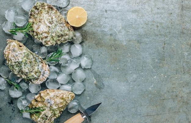 Ostriche crude. frutti di mare freschi su uno sfondo di metallo vista dall'alto con spazio di copia.