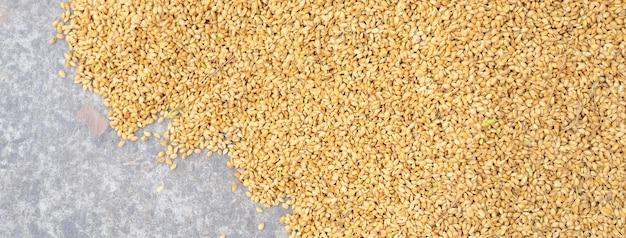 Raccolto di riso crudo esposto alla luce solare su un panno di cotone bianco fuori dalla fabbrica della procedura prima del processo di lucidatura, primo piano, vita reale, stile di vita.