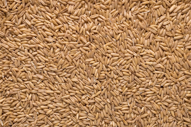 Texture di semi di avena interi crudi