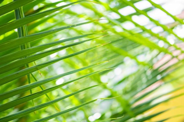 Raggi del sole attraverso le foglie di palma. focalizzazione morbida. natura giungla. primo piano di una foglia di palma verde satura.