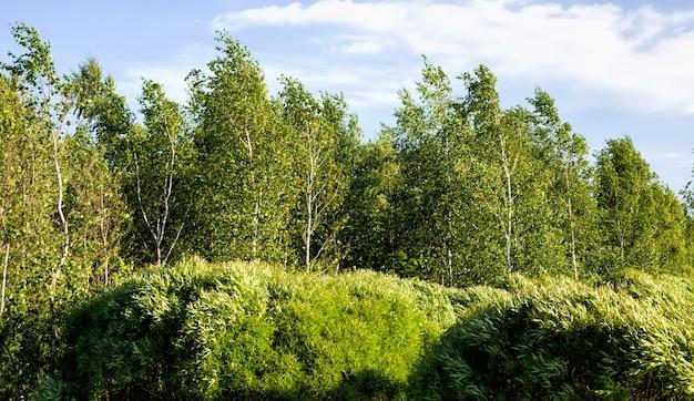 Diversi tipi reali di alberi alla luce del sole in estate o in primavera