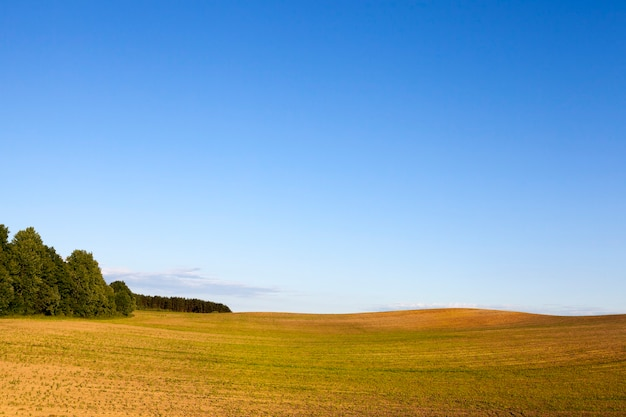 Vera natura con alberi verdi ed erba illuminata dalla luce del sole, vero riposo e distrazione nella natura