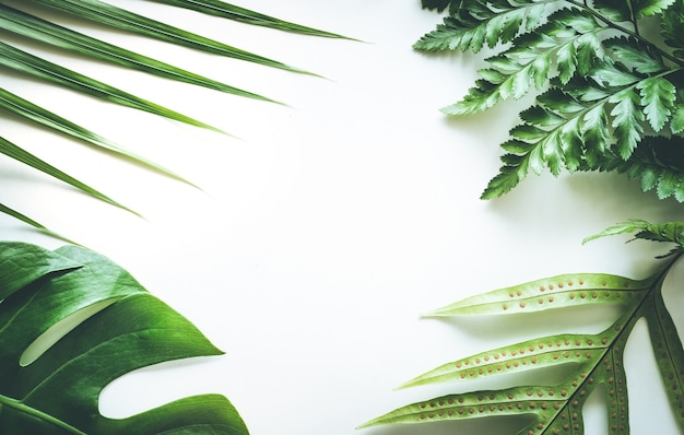 Foglie tropicali reali impostare sfondi modello su bianco. design piatto laici
