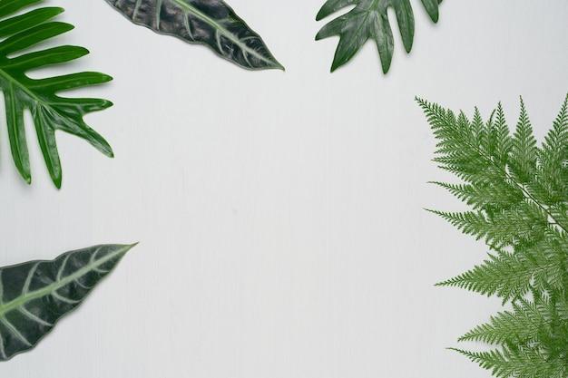 Vere foglie tropicali su fondo in legno bianco