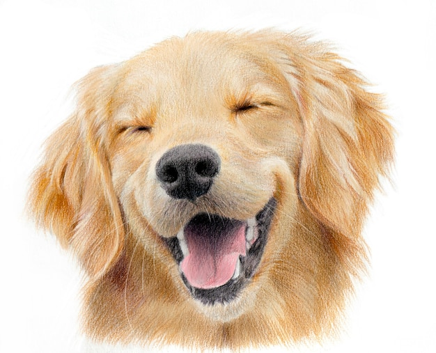 Ritratto realistico di un felice labrador retriever. disegno disegnato a mano di una testa di cane color sabbia isolato su sfondo bianco