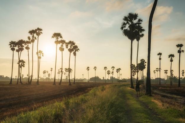 Il fotografo posteriore cattura la foto della fattoria di palme da zucchero all'alba a dongtan sam khok, pathum thani, thailandia. bellissimo punto di riferimento di viaggio per i vacanzieri.
