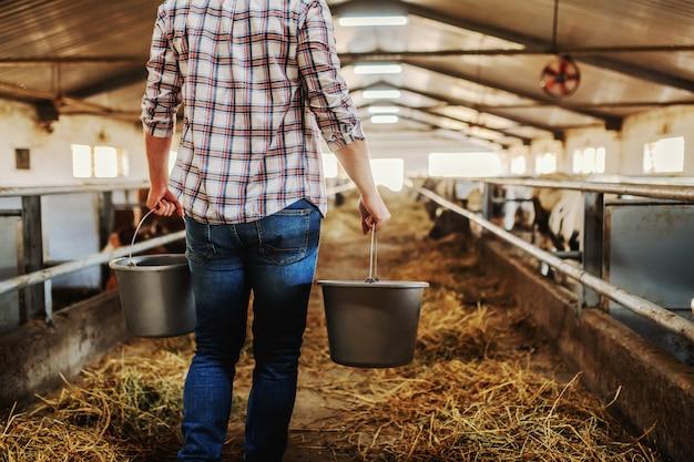 Retrovisione delle benne di trasporto del coltivatore caucasico laborioso con latte fresco e camminare nell'azienda lattiera.