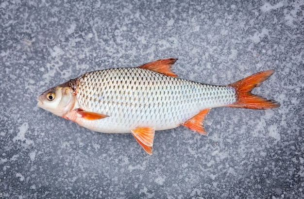 Pesce fresco appena pescato adagiato su ghiaccio freddo.